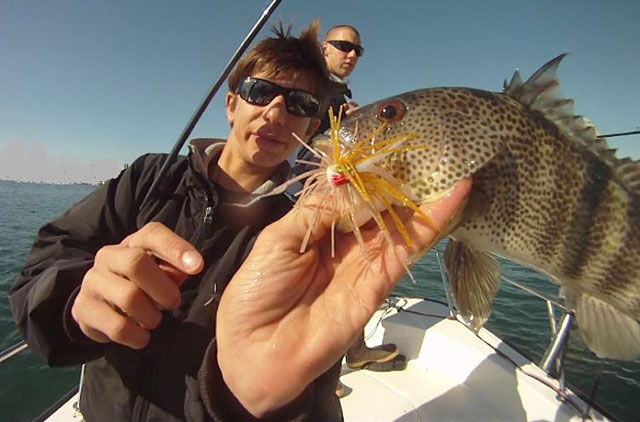 War baits fishing for Bass fishing san diego