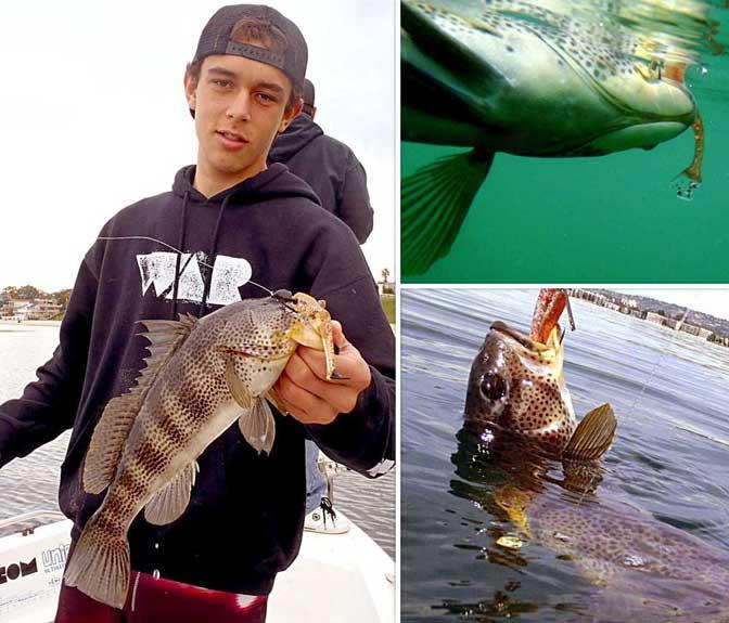 Swimjigs swimming jigs swim jigswarbaits war jigs war for Calico bass fishing
